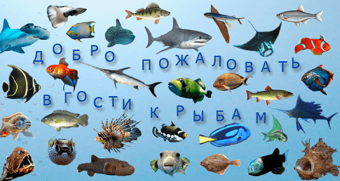 vse ribky