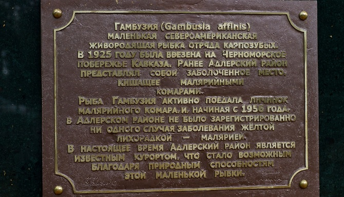 фрагмент памятника гамбузии в Адлере
