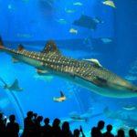 О самой большой акуле