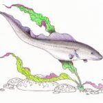 О нильском дракончике — гимнархе