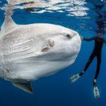 Про огромную и странную рыбу луну