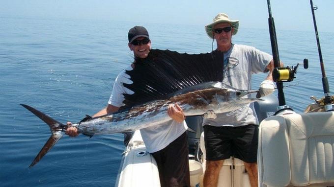 рыба парусник 3