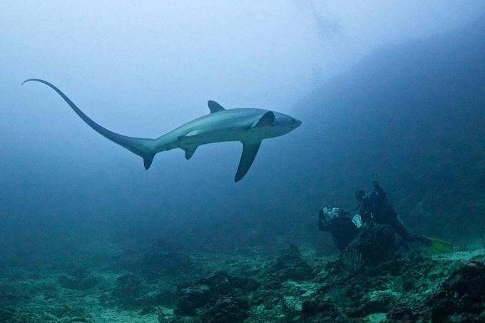лисья акула 5