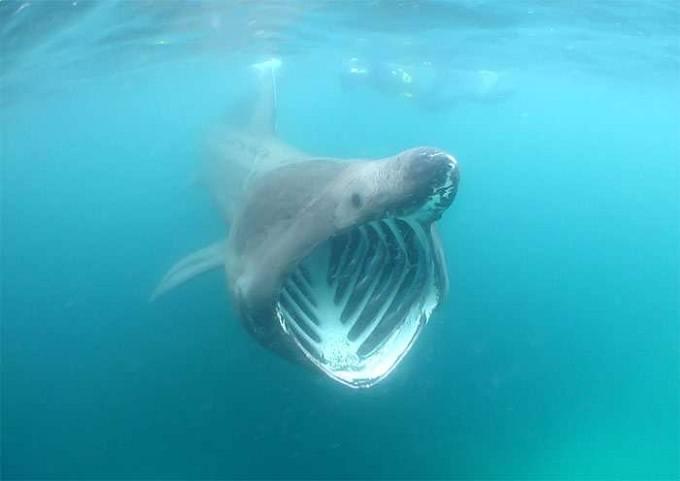 гигантская акула 3