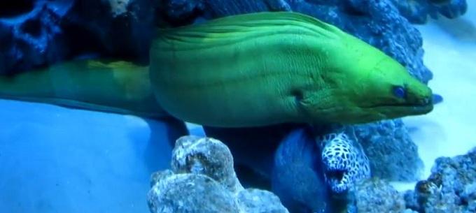 зелёная мурена 6