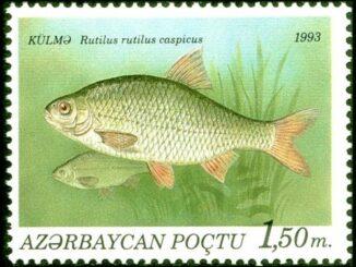 В 1993 году рыбу воблу изобразили на почтовой марке в Азербайджане.