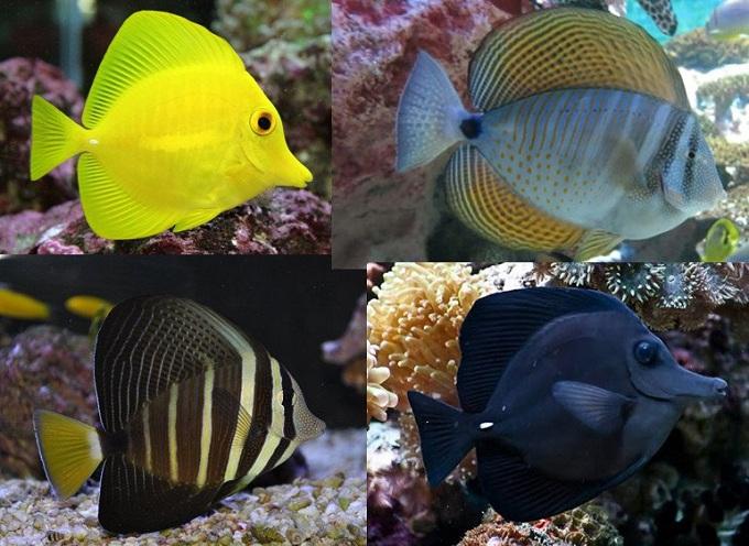полосатая рыба 2