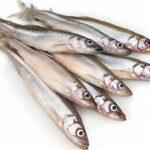Рыба мойва: 5 интересных фактов и рецепт одного блюда
