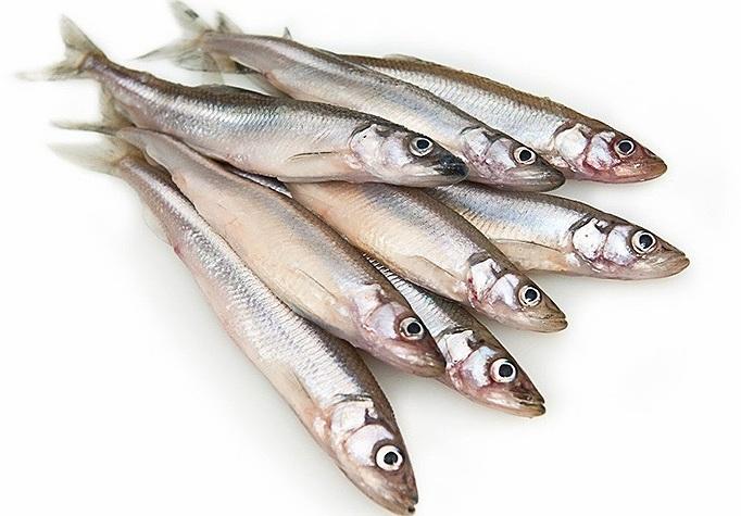 рыба мойва 2
